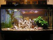 Аквариумы. Подводный мир за стеклом
