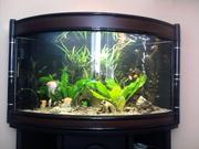 продам аквариум 300л. киев