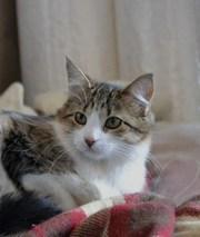 Кошечка Черри для домашнего уюта