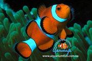 Выставка морских рыб и экзотических живых кораллов с 20 декабря 2011 г