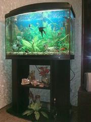 СРОЧНО продается аквариум на 140 л с тумбой и крышкой с освещением!!!