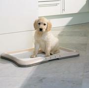 SAVIC туалет для щенков и маленьких собак