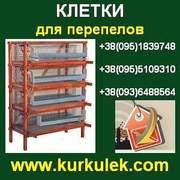 Купить КЛЕТКИ для перепелов в Украине. Доставка.