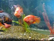 Продам аквариум. Киев