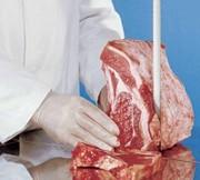 Ленточное полотно для мяса и костей