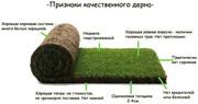 Купить газон ,  Рулонный газон c доставкой / 30 грн. Доставка по всей У