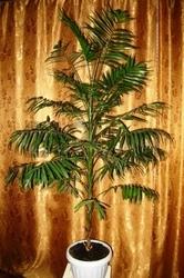 Распродажа комнатных растений!!!!
