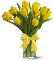 Продам оптом тюльпан. Купить тюльпан оптом в Украине
