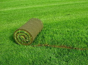 Рулонный газон от производителя с доставкой по Украине.