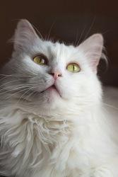 Белое и нежное облачко по имени Кисточка ищет свой дом
