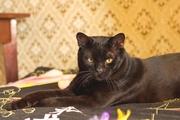 Черный принц Фидель,  10 месяцев