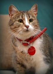 В дар кошка Золушка - миниатюрная красавица с выразительными глазами