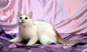 Чудо-котик Лель
