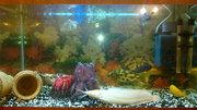 Продам аквариум 120л. В комплекте. 1200грн.