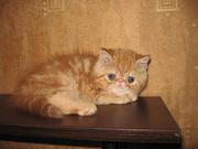 Плюшевые котята-экзотики