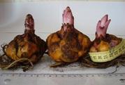 Продам (предлагаю) луковицу лилии и тюльпана