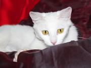 Кошка Ромашка ищет дом!