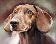 портрет маслом кошки собаки КИЕВ