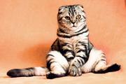 Фотосъемка для ваших  домашних кошек,  котят,  собак,  щенков,  кроликов,  крыс.