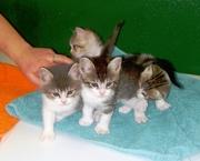 Новогодняя акция! Котята от ветеринара.
