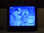 Телевизор Daewoo 55см бу