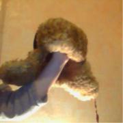 шапка ушанка с искуственным мехом 55 р.