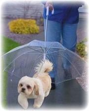 зонты для собак,  светящиеся ошейники