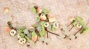Браслет и Серьги «Яблонька»
