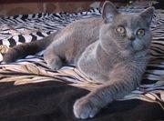 Котенок Бэтмэн