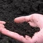 Доставка чернозема Купить чернозем КиевЗаказать чернозем
