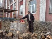 Спил деревьев  Киев.