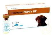 Нобивак Puppy DP,  1 фл. (1 доза) + растворитель 1 фл.