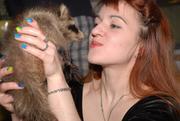 Самый популярный зверек этого года – енот полоскун ручные щенки