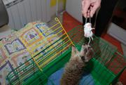 Малыши сурикаты (Suricata suricatta) ручные забавные питомцы