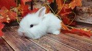 Кролик декоративный. Ручные малыши крольчата. Лучший питомец для деток