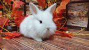 Кролик декоративный. Ручные малыши крольчата разных пород и возрастов