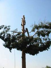 спиливание деревьев киев, спилить дерево, обрезка деревьев 233 03 70
