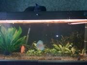 Продам аквариум с рыбами и растениями